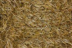 Ciérrese para arriba de la tierra Paja o heno de la textura Foto de archivo