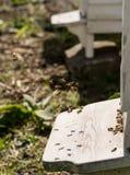 Ciérrese para arriba de las abejas que vuelan dentro y fuera de sus colmenas Fotografía de archivo libre de regalías
