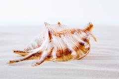 Ciérrese para arriba de las cáscaras del mar en la playa Fotos de archivo