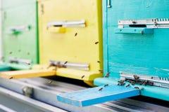 Ciérrese para arriba de las cajas de la colmena en colmenar Imagenes de archivo