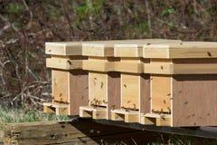 Ciérrese para arriba de las colmenas de Honey Bee Fotografía de archivo