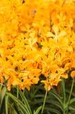 Ciérrese para arriba de las flores anaranjadas de la orquídea Imágenes de archivo libres de regalías