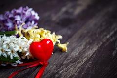 Ciérrese para arriba de las flores blancas y azules del jacinto con el backg rojo del corazón imágenes de archivo libres de regalías