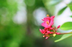 Ciérrese para arriba de las flores rojas del prado borrosas Fotografía de archivo