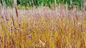 Ciérrese para arriba de las flores salvajes en un prado Imagen de archivo