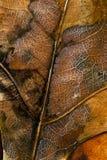 Ciérrese para arriba de las hojas de otoño Foto de archivo libre de regalías