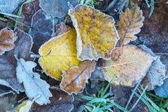 Ciérrese para arriba de las hojas de otoño heladas Foto de archivo libre de regalías