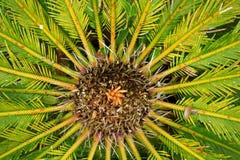 Ciérrese para arriba de las hojas de una palmera Fotografía de archivo libre de regalías