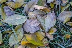 Ciérrese para arriba de las hojas de otoño heladas en mañana fría Foto de archivo