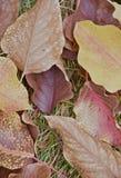 Ciérrese para arriba de las hojas de otoño hermosas Imagen de archivo