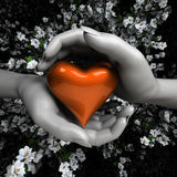 Ciérrese para arriba de las manos de la mujer que llevan a cabo el corazón Foto de archivo