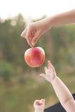Ciérrese para arriba de las manos de los bebés que alcanzan hacia fuera a la manzana en mano del ` s de la madre foto de archivo