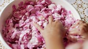 Ciérrese para arriba de las manos femeninas que ahuecan la floración rosada delicada de la flor en palmas almacen de video