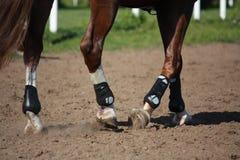 Ciérrese para arriba de las piernas del caballo con las botas de la protección Imágenes de archivo libres de regalías