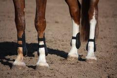Ciérrese para arriba de las piernas del caballo con las botas de la protección Foto de archivo libre de regalías