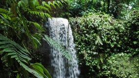 Ciérrese para arriba de las plantas del helecho de la selva delante de la cascada tropical almacen de metraje de vídeo