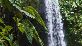 Ciérrese para arriba de las plantas del helecho de la selva que se mueven por la brisa de una cascada tropical almacen de metraje de vídeo