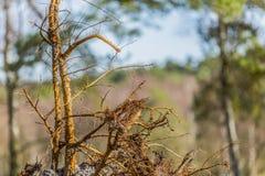 Ciérrese para arriba de las raíces de un árbol caido fotos de archivo libres de regalías