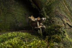 Ciérrese para arriba de las setas del bosque Imágenes de archivo libres de regalías