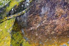Ciérrese para arriba de liquen en las rocas Imagen de archivo libre de regalías