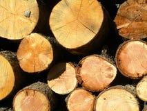 Ciérrese para arriba de los anillos de crecimiento, pila de madera Fotos de archivo libres de regalías