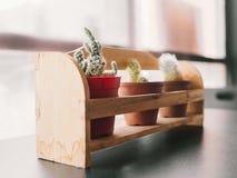 Ciérrese para arriba de los potes del cactus Foto de archivo