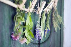 Ciérrese para arriba de los ramos mediterráneos de las hierbas, sabio, albahaca, lavanda, tomillo en el fondo de madera verde rús imagen de archivo