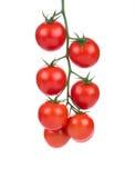 Ciérrese para arriba de los tomates de cereza Imagen de archivo