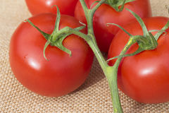 Ciérrese para arriba de los tomates sanos maduros frescos de la vid en un materi de la arpillera fotos de archivo libres de regalías