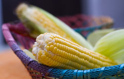 Ciérrese para arriba de maíz indio Fotos de archivo libres de regalías