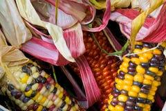 Ciérrese para arriba de maíz indio americano en una cesta Foto de archivo libre de regalías