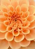 Ciérrese para arriba de margaritas amarillas foto de archivo