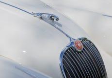 Ciérrese para arriba de mascota del capo de Jaguar imagen de archivo libre de regalías