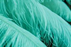 Ciérrese para arriba de muchas plumas azules suaves de la menta Foto de archivo libre de regalías
