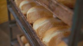 Ciérrese para arriba de muchos panes frescos del pan 4K del trigo almacen de metraje de vídeo