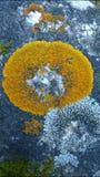 Ciérrese para arriba de musgo en rocas Fotos de archivo