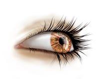 Ciérrese para arriba de ojo con los latigazos largos Foto de archivo