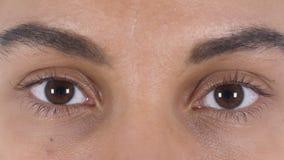 Ciérrese para arriba de ojos latinos jovenes del centelleo de la mujer almacen de video
