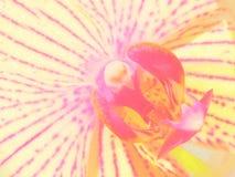 Ciérrese para arriba de orquídea Foto de archivo
