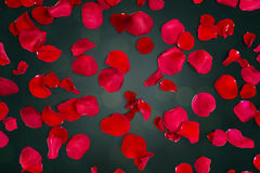 Ciérrese para arriba de pétalos color de rosa rojos sobre fondo de las luces Imagenes de archivo