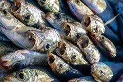 Ciérrese para arriba de pescados en el mercado Foto de archivo