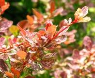 Ciérrese para arriba de plantas coloridas Fotos de archivo