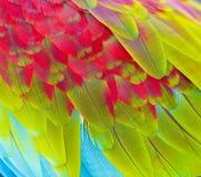 Ciérrese para arriba de plumas coloridas Fotos de archivo libres de regalías