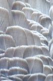 Ciérrese para arriba de plumas del pato Foto de archivo