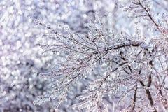 Ciérrese para arriba de ramas cubiertas hielo chispeantes Imagen de archivo