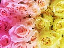Ciérrese para arriba de rosas artificiales Imagen de archivo libre de regalías
