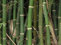 Ciérrese para arriba de tallos de bambú agrupados Fotos de archivo libres de regalías