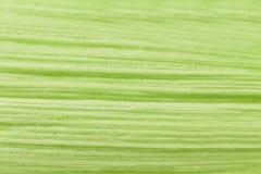 Ciérrese para arriba de textura de la hoja del maíz. Imágenes de archivo libres de regalías