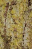 Ciérrese para arriba de textura del tronco de árbol Fotografía de archivo