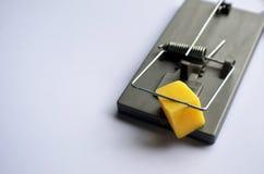Ciérrese para arriba de trampa del ratón fotografía de archivo